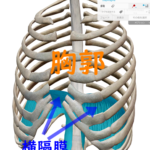 胸式呼吸・腹式呼吸のどっちが良いの?①の詳細へ